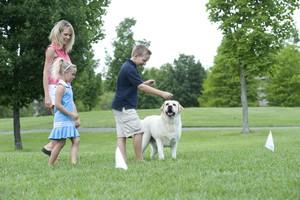 electronic pet fence training dog